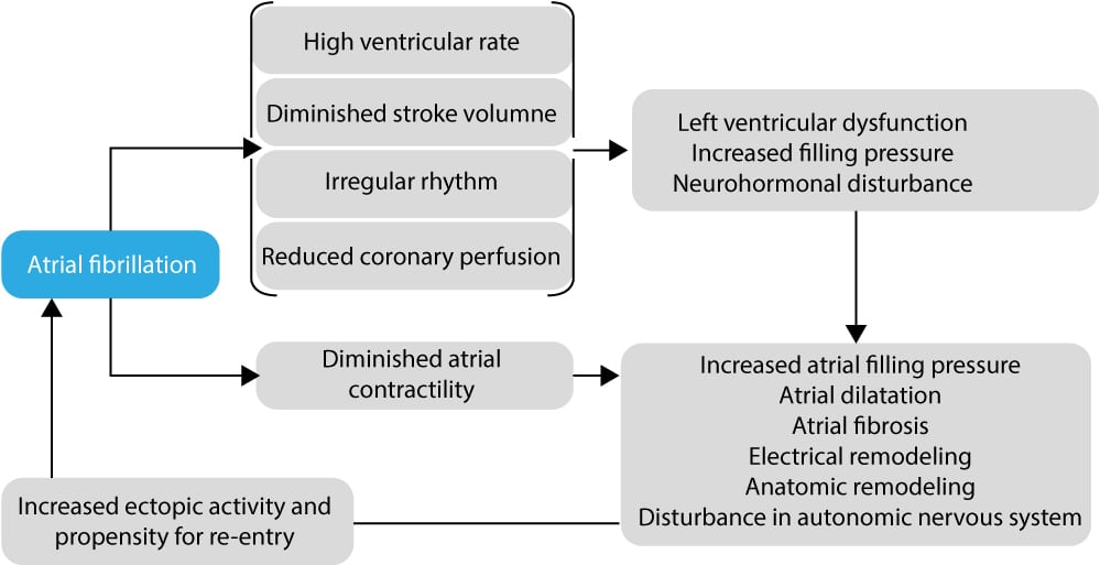 Figure 5. Flow chart showing the development of atrial fibrillation and how it promotes continued fibrillatory activity.