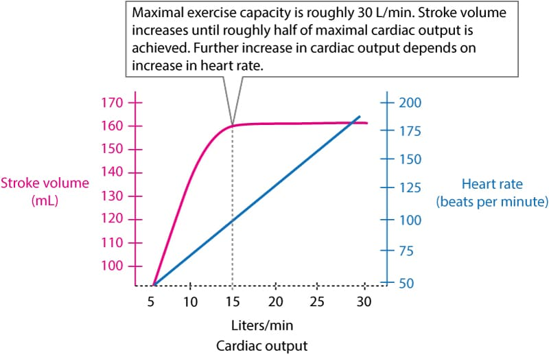 Figure 1. The relationship between heart rate, stroke volume and cardiac output during exercise.