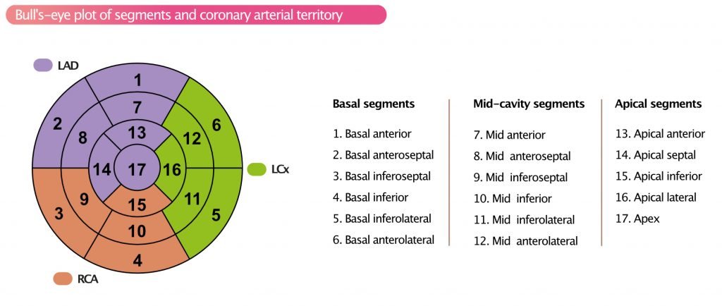 Figure 2. Display, on a circumferential polar plot, of the 17 myocardial segments and the recommended nomenclature for tomographic imaging of the heart.