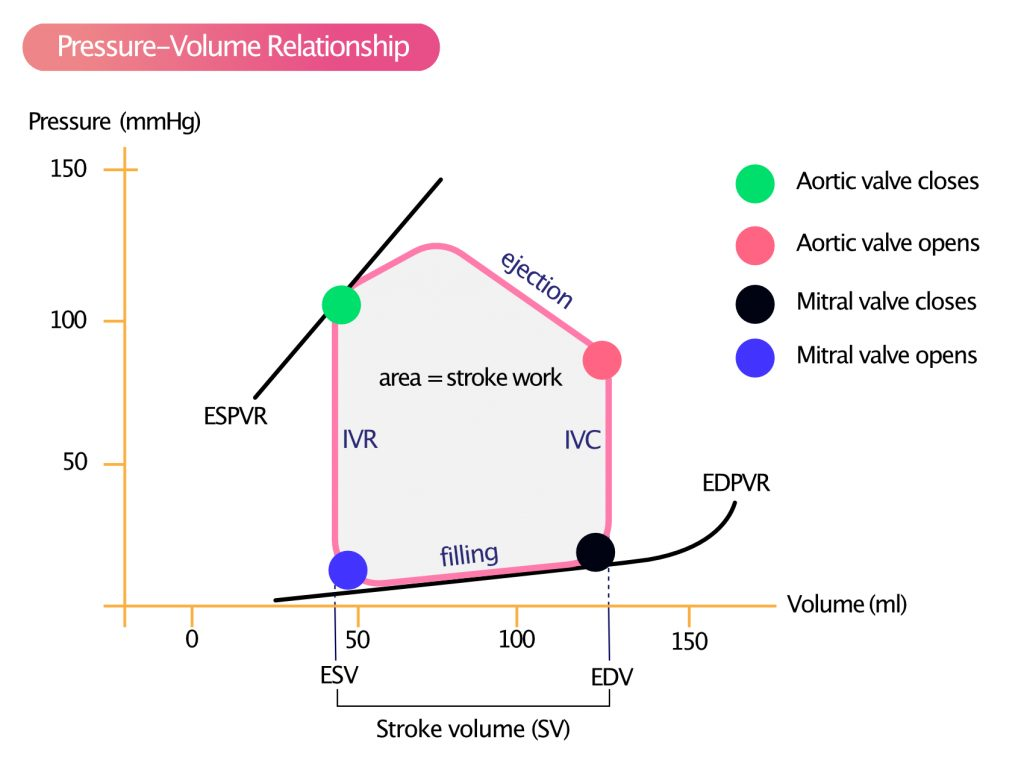 Figure 1. Left ventricular pressure-volume relationship during a single cardiac cycle.