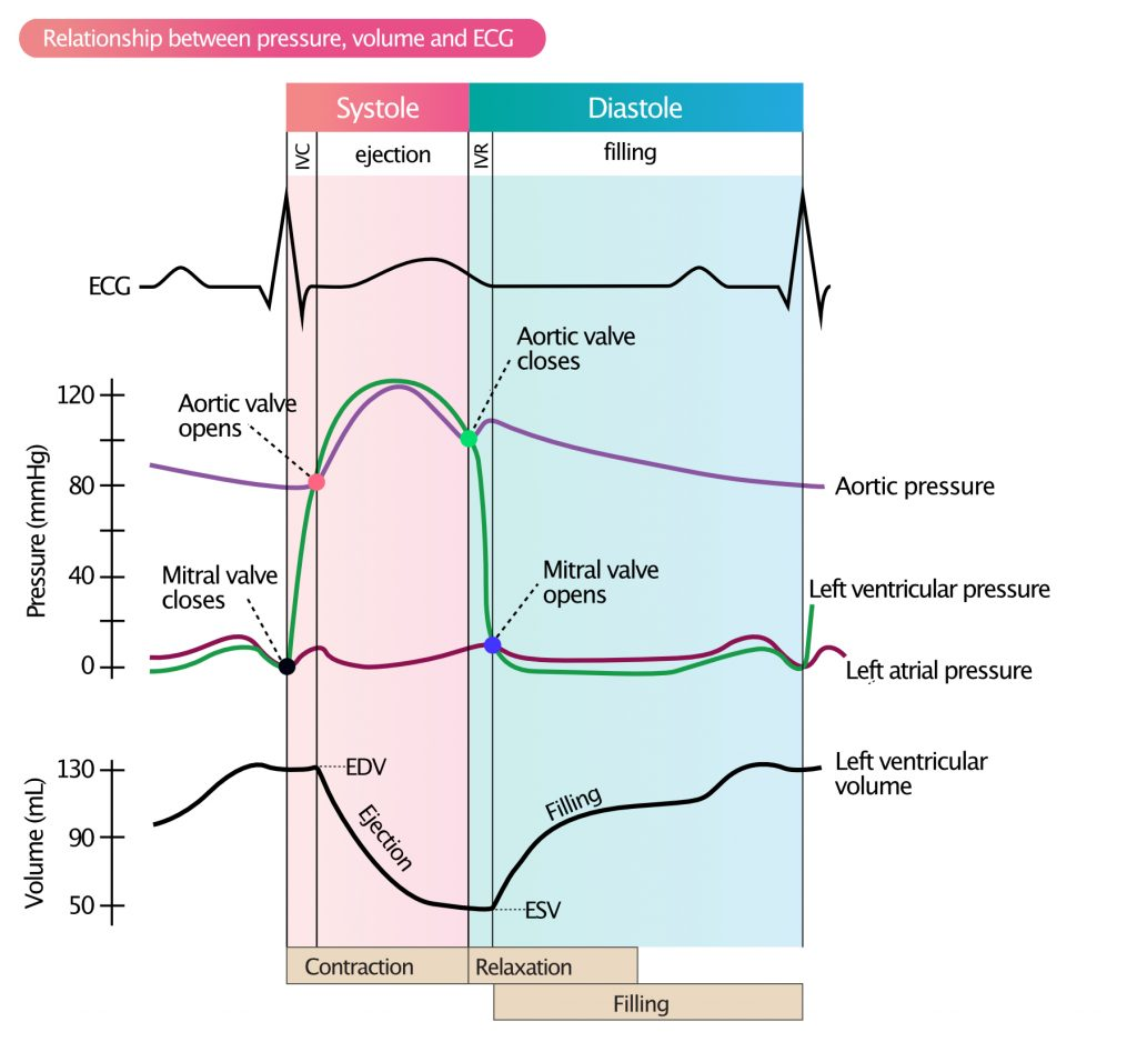 Figure 2. Left ventricular pressure-volume relationship and ECG waveforms during systole and diastole.